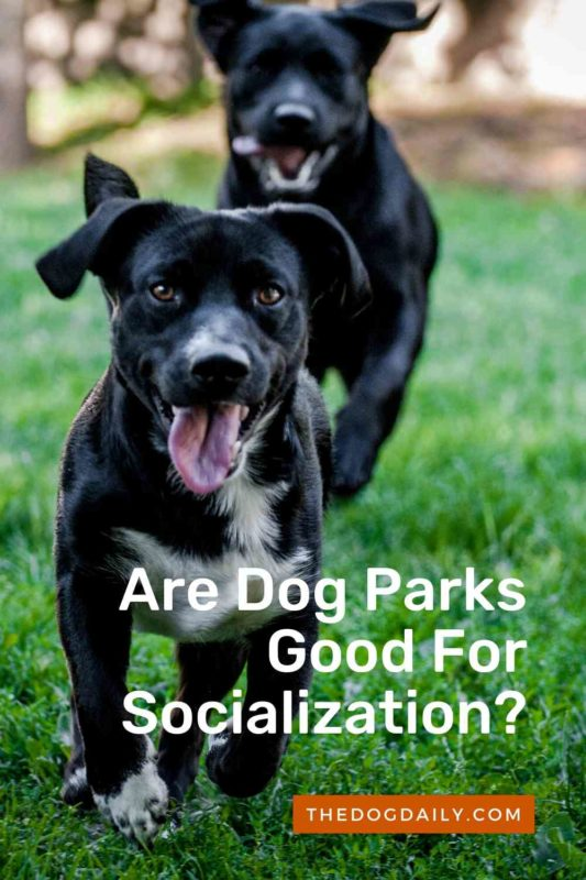 Are Dog Parks Good For Socialization thedogdaily.com