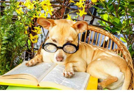 Can You Teach Your Dog to Read Banner