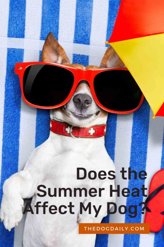 Does the Summer Heat Affect My Dog thedogdaily