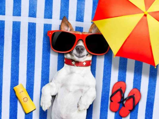Does the Summer Heat Affect My Dog Banner thedogdaily