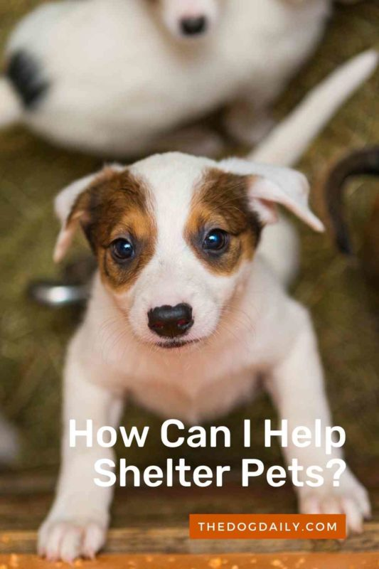 How Can I Help Shelter Pets thedogdaily.com