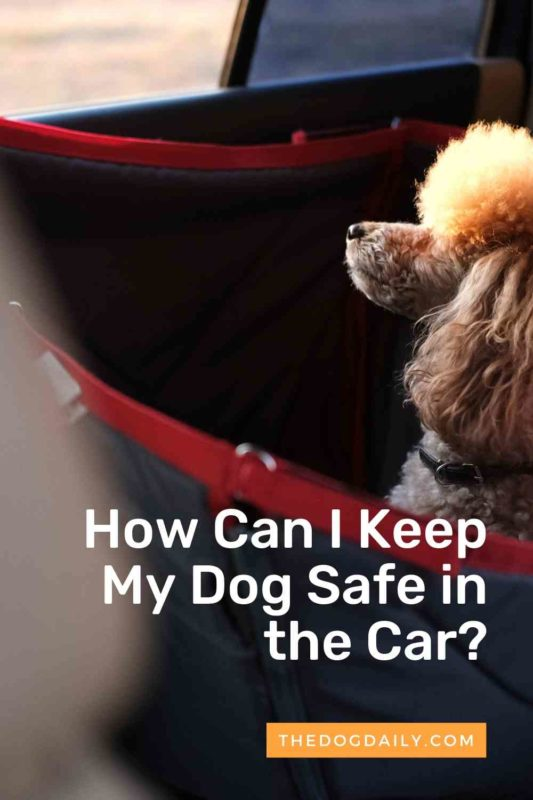 How Can I Keep My Dog Safe in the Car thedogdaily.com