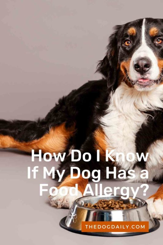 How Do I Know If My Dog Has a Food Allergy thedogdaily.com