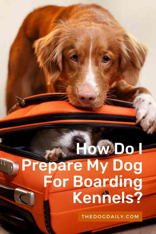 How Do I Prepare My Dog For Boarding Kennels thedogdaily.com