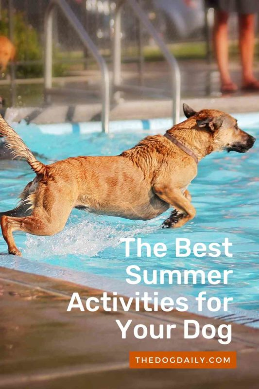 The Best Summer Activities for Your Dog thedogdaily