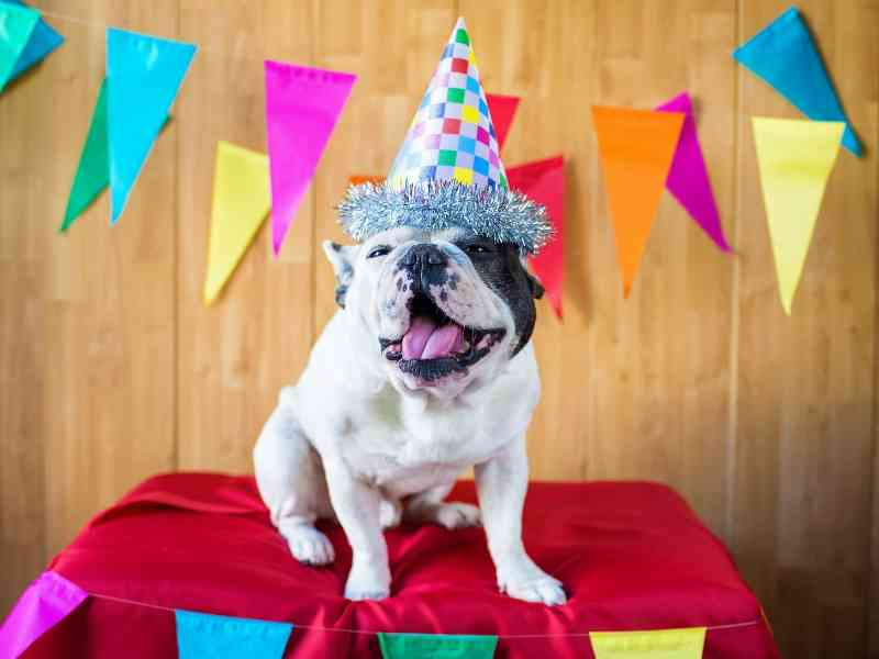 What Can I Do For My Dog's Birthday Banner thedogdaily.com