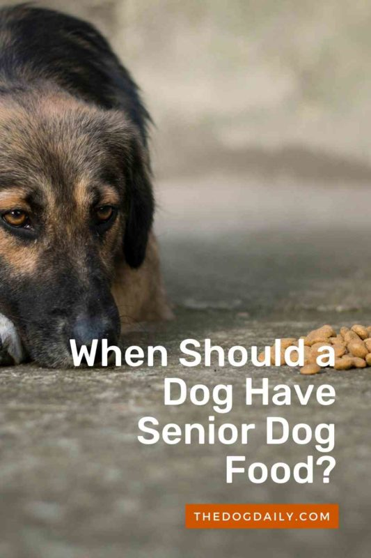 When Should a Dog Have Senior Dog Food thedogdaily.com