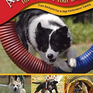 Agility Training for You and Your Dog 1 thedogdaily.com