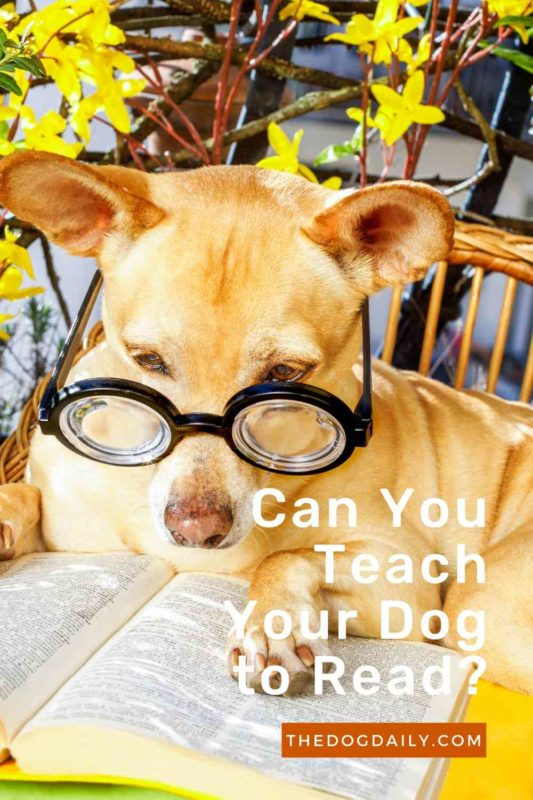 Can You Teach Your Dog to Read