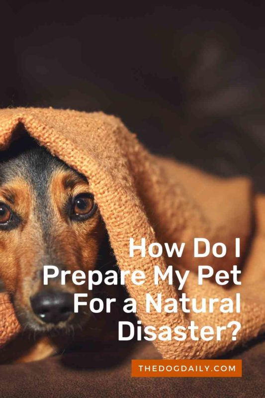 How Do I Prepare My Pet For a Natural Disaster thedogdaily