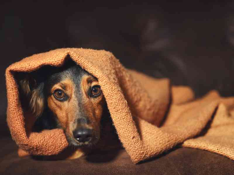 How Do I Prepare My Pet for a Natural Disaster Banner thedogdaily