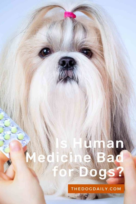 Is Human Medicine Bad for Dogs thedogdaily