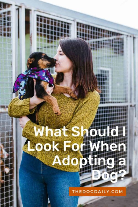 What Should I Look For When Adopting a Dog thedogdaily