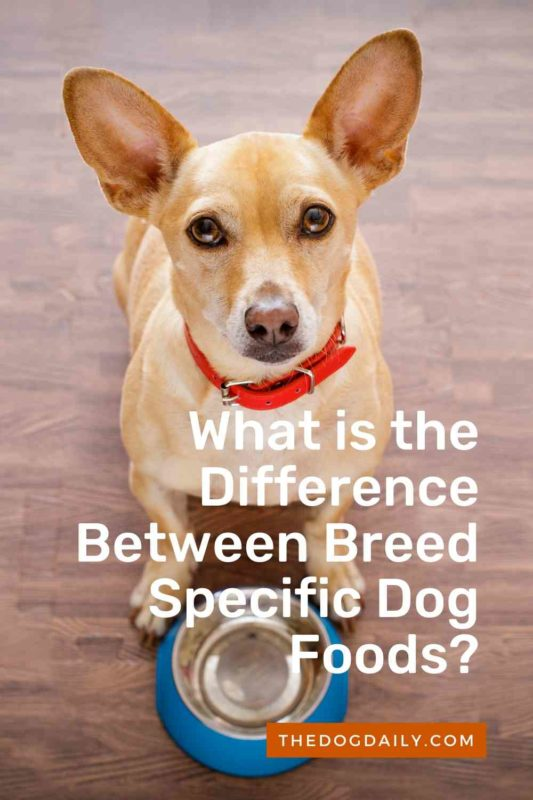 What is the Difference Between Breed Specific Dog Foods thedogdaily