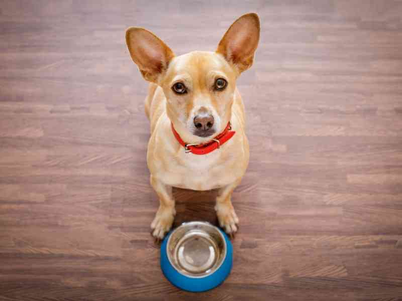 What is the Difference Between Breed Specific Dog Foods Banner thedogdaily