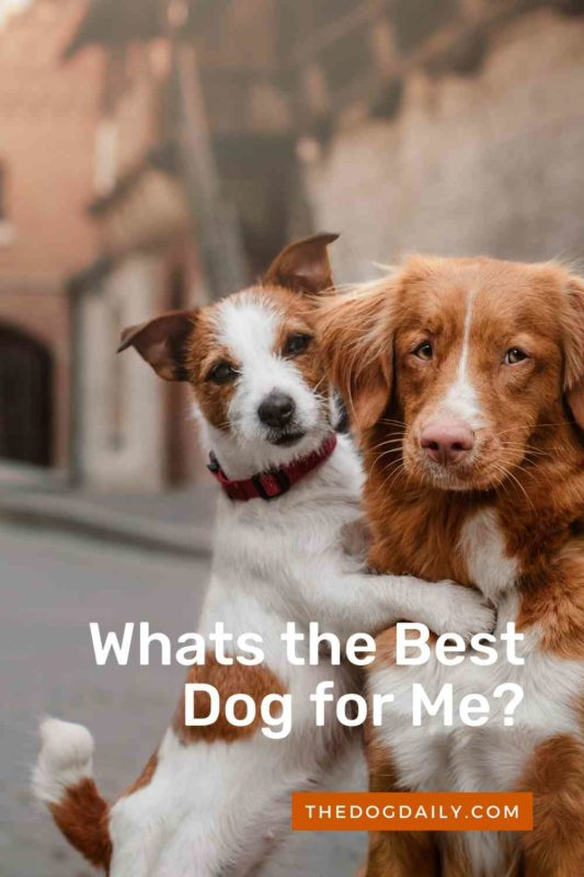 Whats the Best Dog for Me thedogdaily