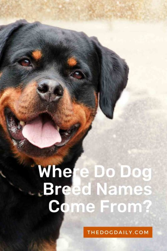 Where Do Dog Breed Names Come From thedogdaily
