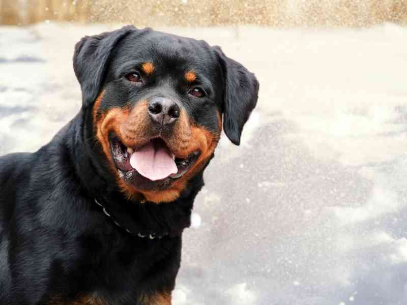 Where Do Dog Breed Names Come From Banner thedogdaily